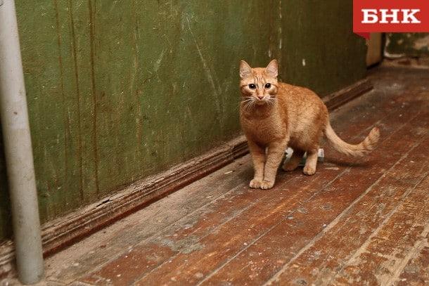 В Госдуму внесли проект об обязательной регистрации собак и кошек