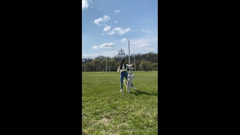 Я и лучшая в мире собака)