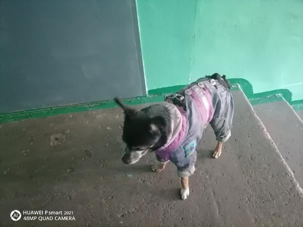 Кто потерял собаку в 13мик бегает с утра В одежде ...