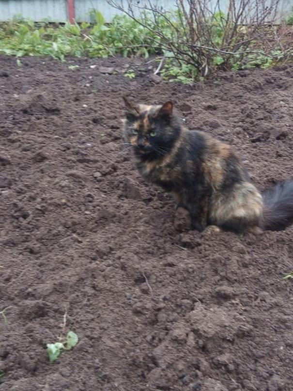 Кто кошку потерял, район Плахи Гетруда