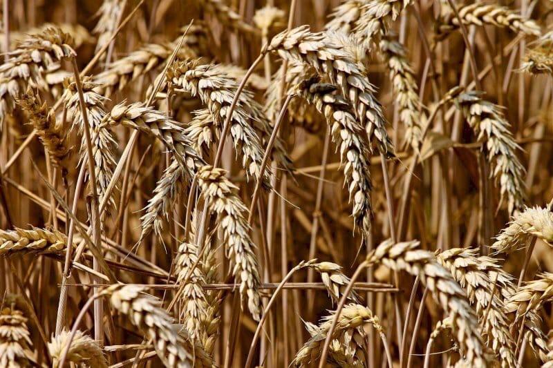 🥕 Челябинские аграрии оценивают ущерб от жары почти в миллиард рублей