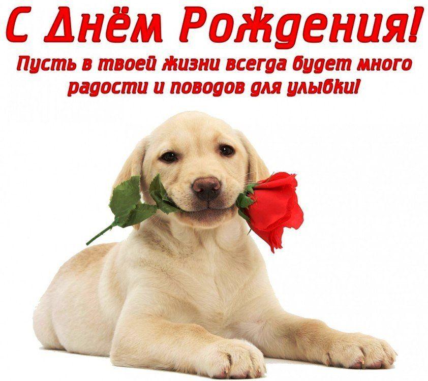 Сегодня поздравляем с Днем Рождения: Анна Левицкая ([id88541478|@id88541478]),