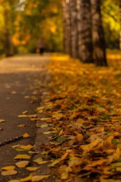 Осенние краски НовосибирскаФотограф: Максим Калашн...