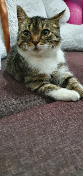 Найдись хозяин смешного парня😁прибился на улице,котик с з...