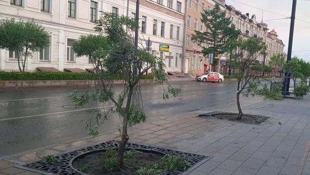 Омичка заплатит 80 тысяч рублей за сломанные дерев...