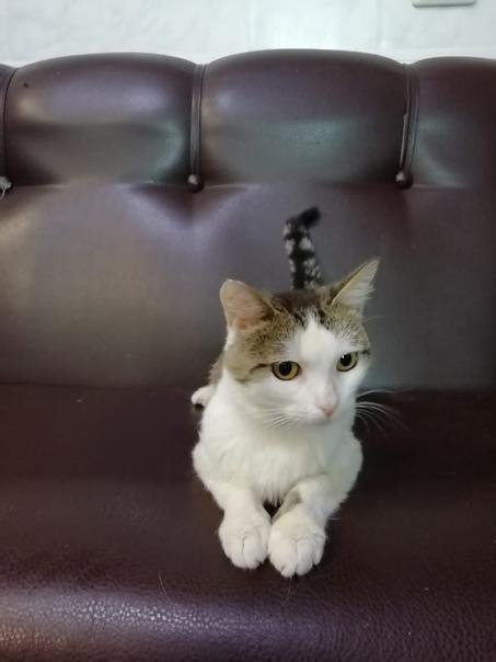 Особенный котик ищет дом.Очень ласковый,на отлично...