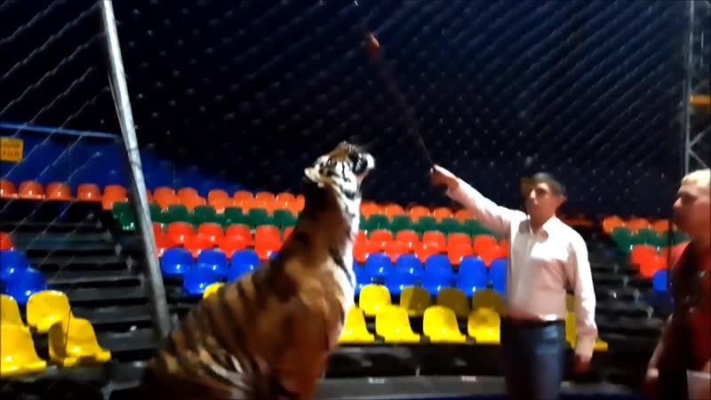 Тигрица Дана Цирк династии Довгалюк