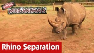 Опасно! Дикие животные: Отделение носорога от матери / Separating A Rhino From The Mother | E04 | Danger! Wild Animals