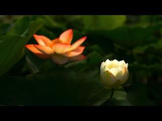 #33 Лечебная музыка для сердца и сосудов   Нежная музыка, успокаивает нервную систему и радует душу