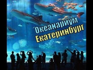 Океанариум в Екатеринбурге. Экскурсии из Челябинска