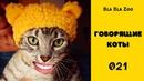 Говорящие коты. Смешные животные. Приколы с животными / Подборка 021