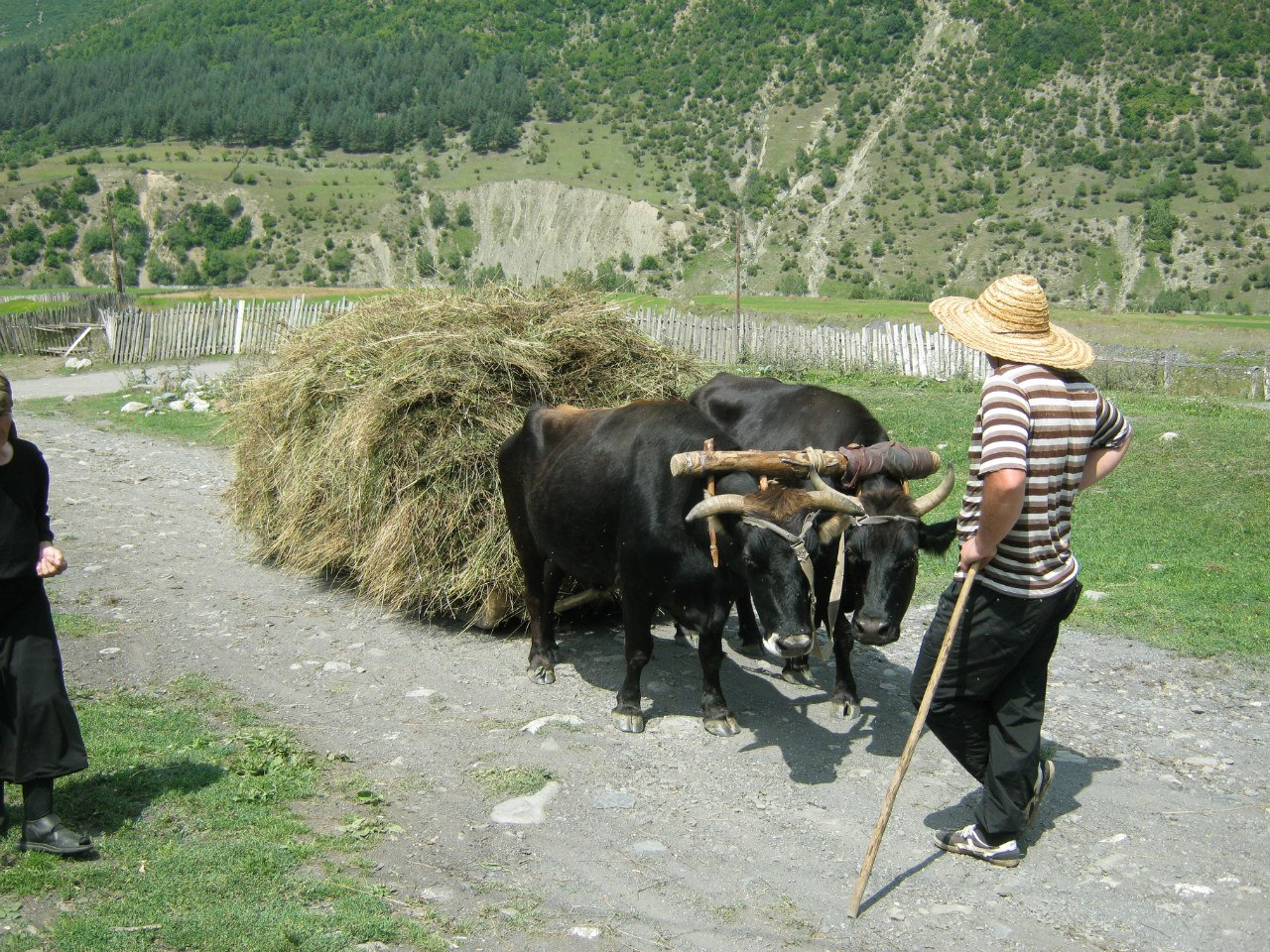 В Верхней Сванетии быки возят свою еду на санях