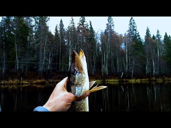 По таёжным урочищам Костромской глухомани Щуки хвойного озера За Унжу на бескрайние болота