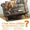 DOGCiTY Дрессировка собак = С любовью к собакам