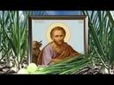 5 мая - в Луков день разрежьте луковицу и скажите. Избавляемся от проблем . Заговор на урожай лука.
