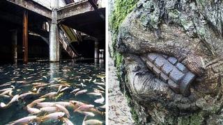 Доказательство Того, что Природа Берет Заброшенные Места под Свой Контроль