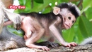 Very Pity Cutest Baby Eve Is Trying To Escape From Kidnapper and Old Sister Elly - Wildlife 2020