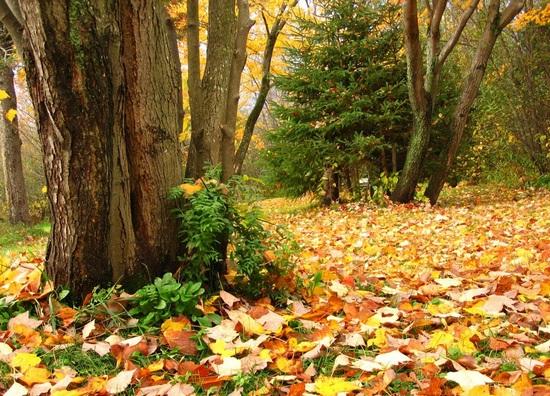 Ещё немного про октябрь. Народные приметы погоды в октябре