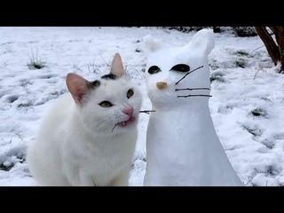 ПРИКОЛЫ С ЖИВОТНЫМИ 😺🐶 Смешные Животные Собаки Смешные Коты Приколы с котами Забавные Животные #83