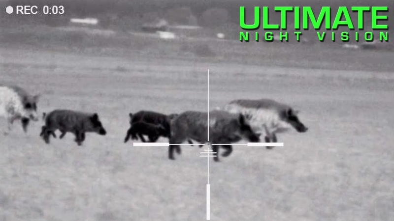 125 Hogs Down with the Pulsar Trail XQ50 XP50 Hunting with Thermal